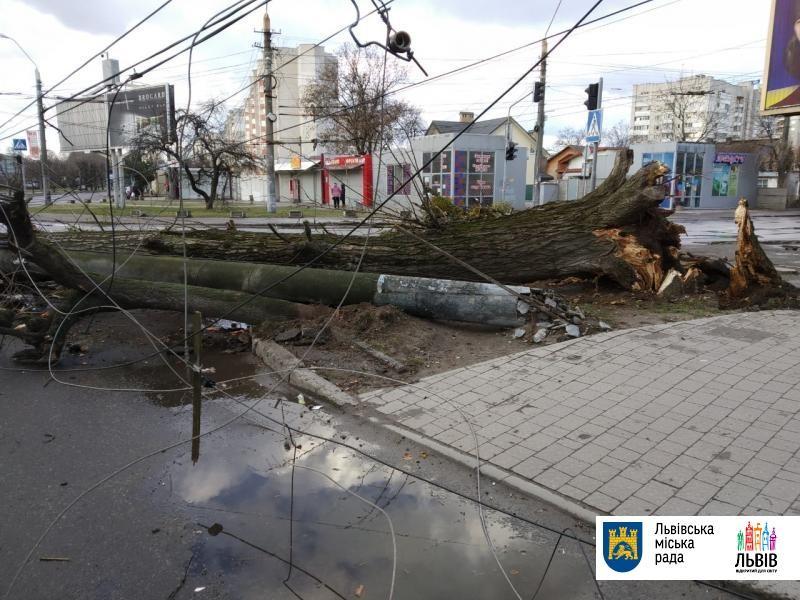 Львовом пронесся ураганный ветер / фото city-adm.lviv.ua