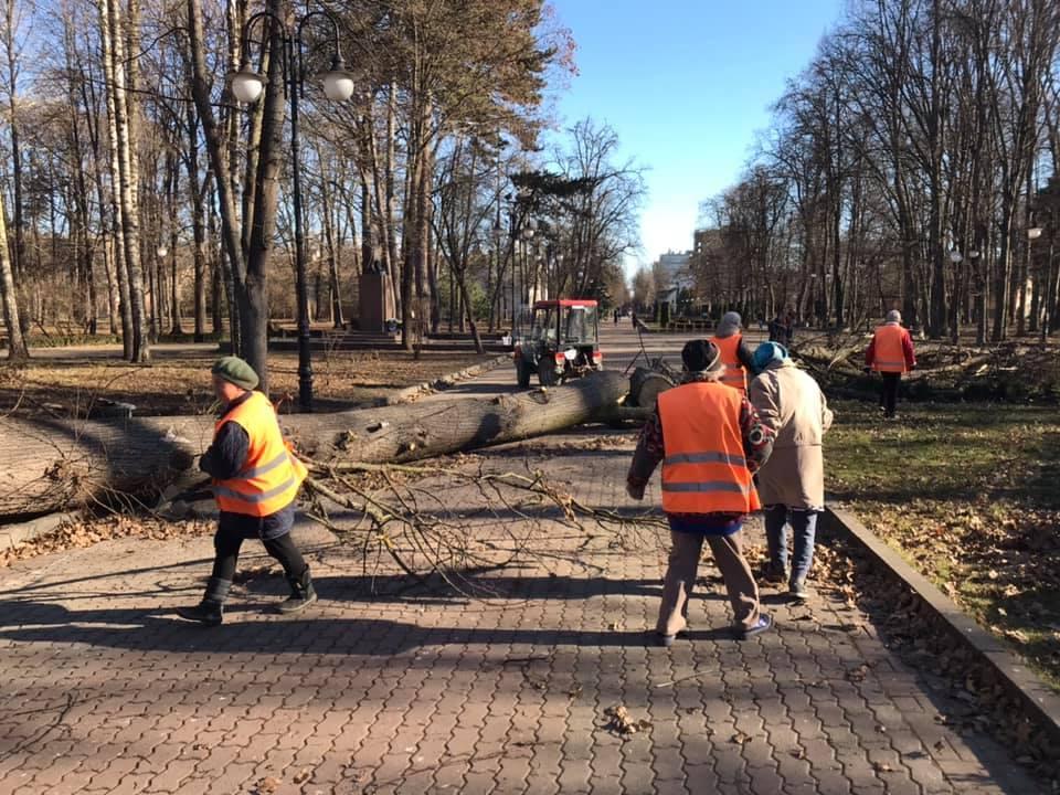 В Украине сильный ветер повалил деревья / фото gk-press.if.ua