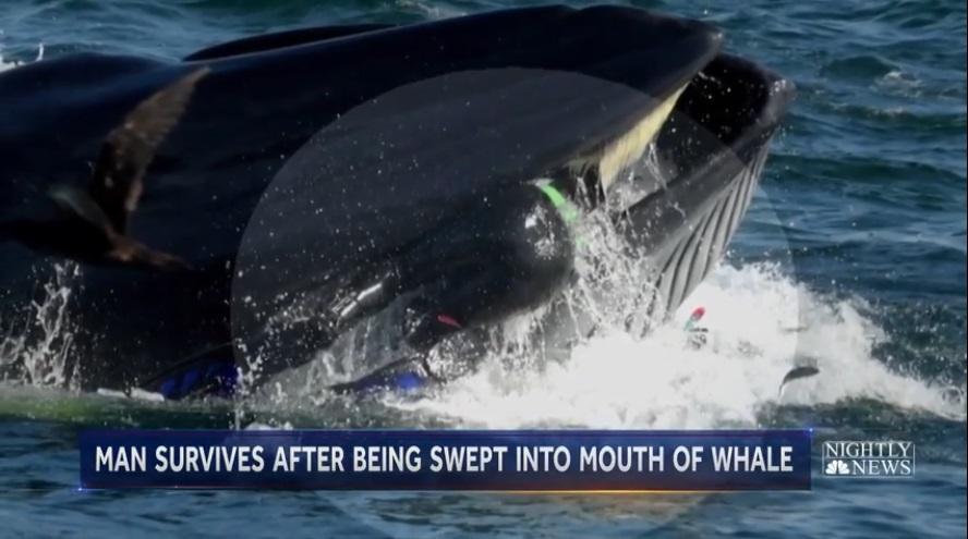 Кадры проглатывания китом дайвера были сделаны в бухте Елизаветы / скриншот