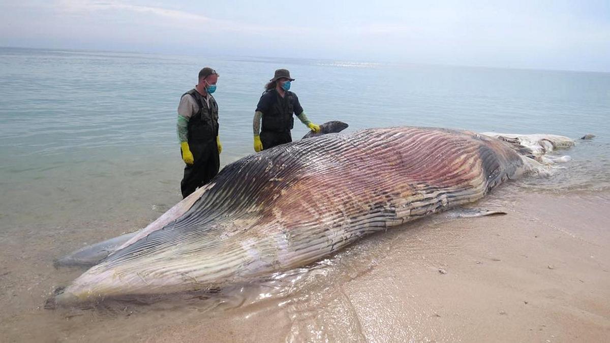 Біля узбережжя ОАЕ і раніше знаходили загиблих морських ссавців \ epaa_shj