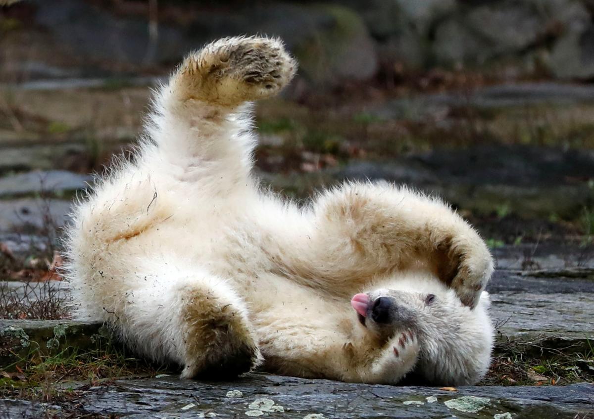 Имя игривому медвежонку выберут через месяц / REUTERS