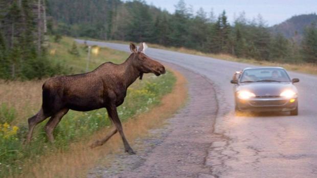 Из водителей и пассажиров никто не пострадал / иллюстрация: miskobirza.lt