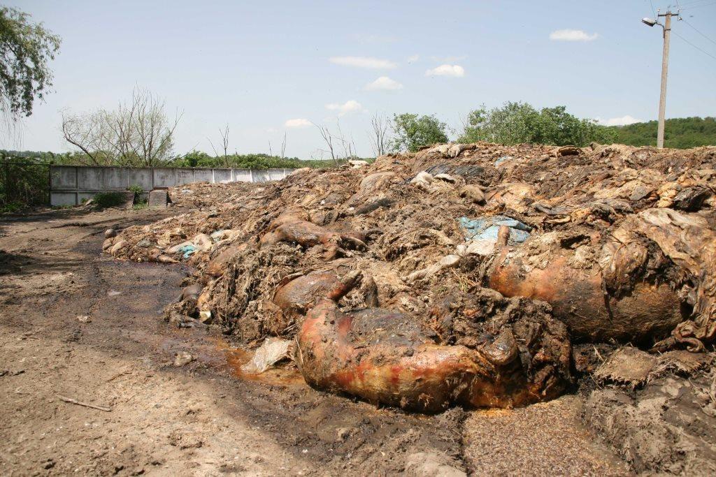 На Тернопільському ветсанзаводі накопичилося 4 тис. т відходів, улітку вони своїм смородом створюють незручностям жителям прилеглих територій / фото За Збручем