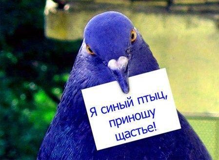 день счастья поздравления/ newspaper.kpfu.ru