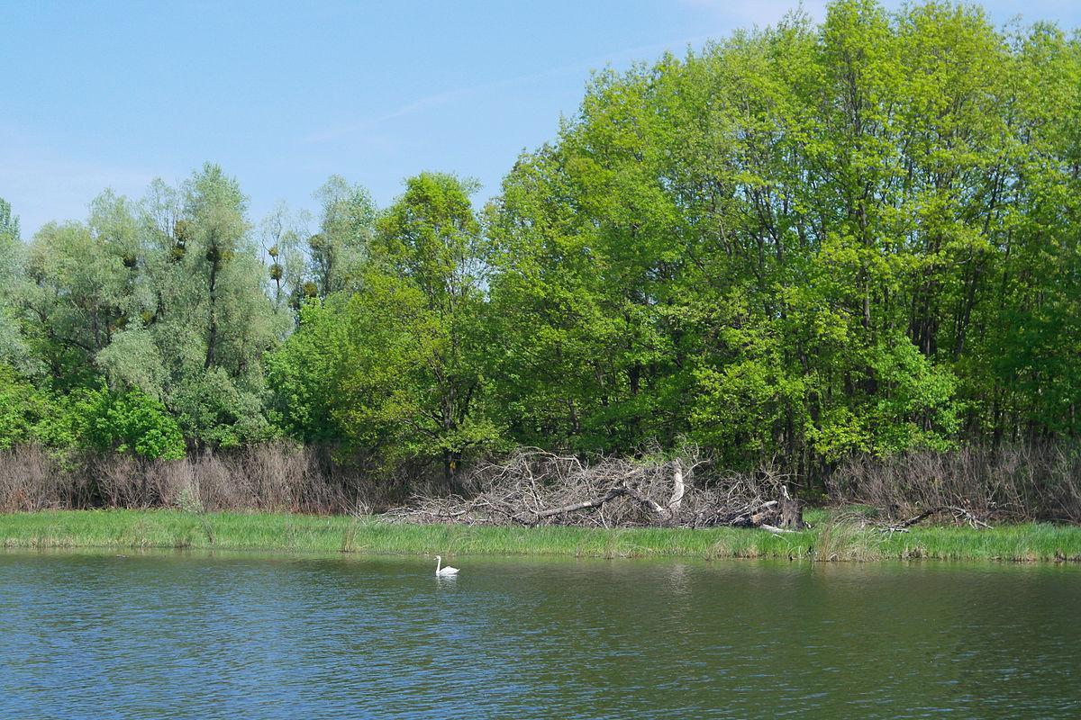 Жуков остров – умиротворенное и живописное место / Фото wikipedia.org