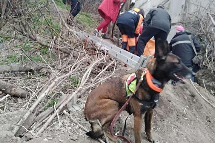 Відшукати жінку допомігсобака на ім'я Спаркі/ фото: Nikopolnews