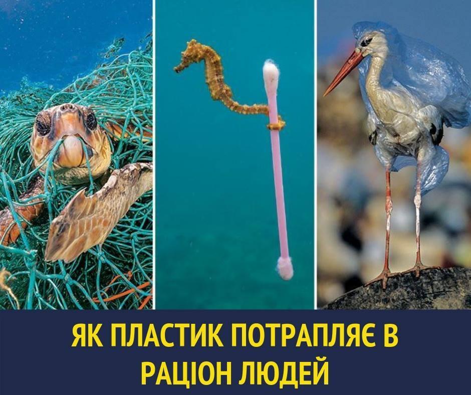 Пластик находят повсюду / фото facebook.com/ulanasuprun