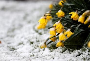 От заморозков до +20°: сегодня украинцев ожидают температурные качели (карта)