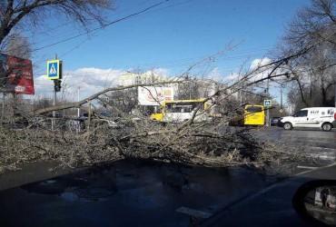 У Чернігові сильний вітер валить дерева та руйнує дахи будинків, є постраждалий (фото)
