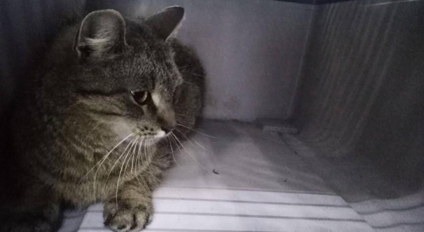 Дикий кот устроил погром в столичной посудной лавке