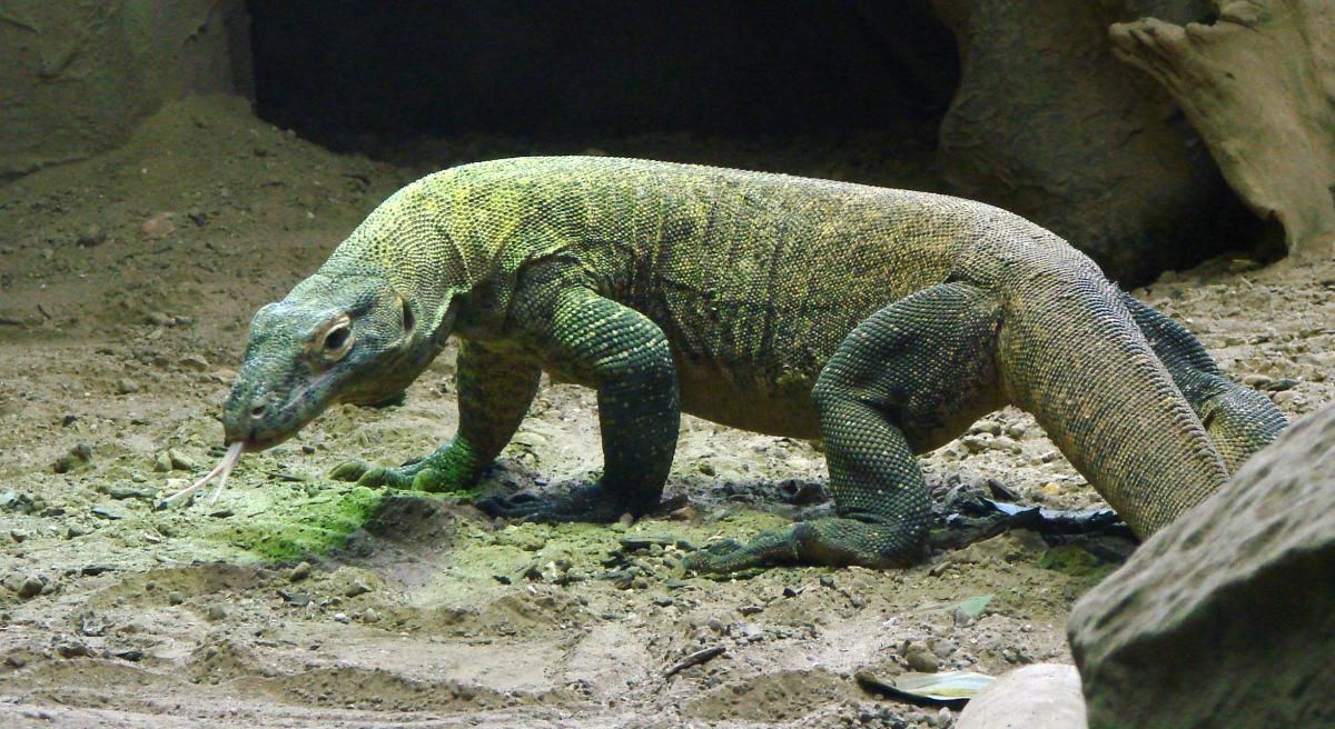 Стоимость каждого животного составляет около $55 тыс. \ Wikimedia Commons