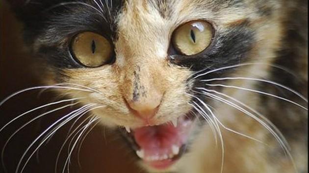 Кот не был привит / фото ru.golos.ua