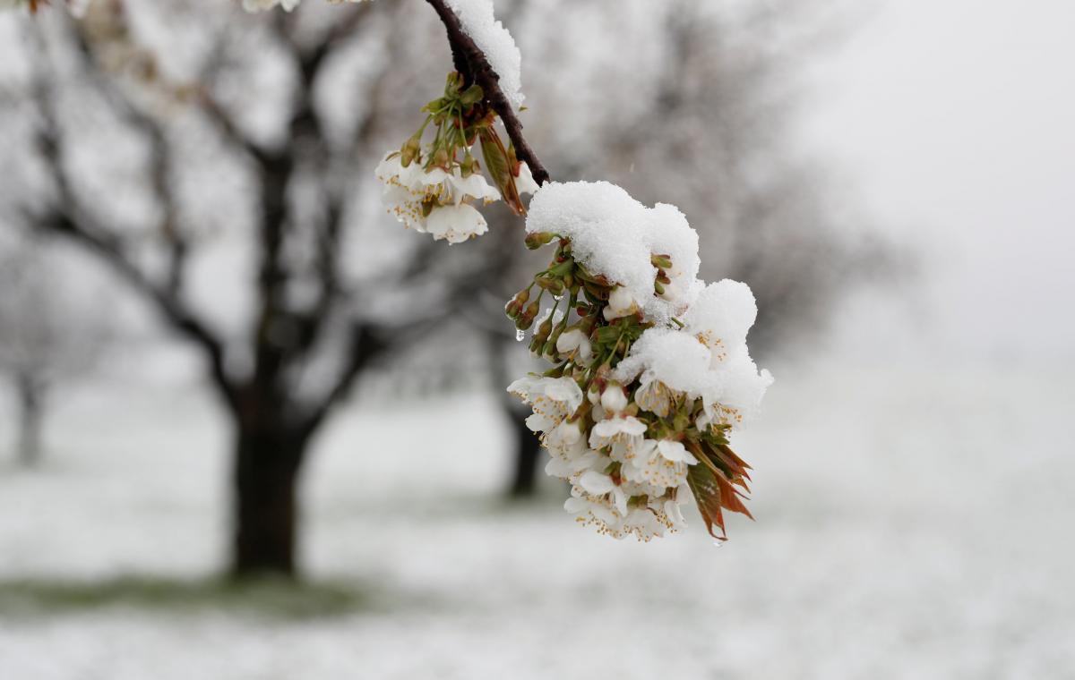 Снегопад в Швейцарии / REUTERS