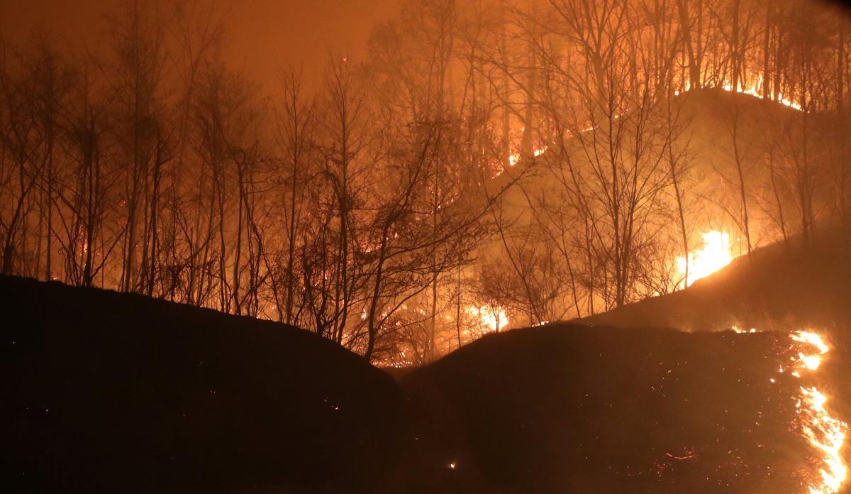 Лесной пожар в Южной Корее / REUTERS