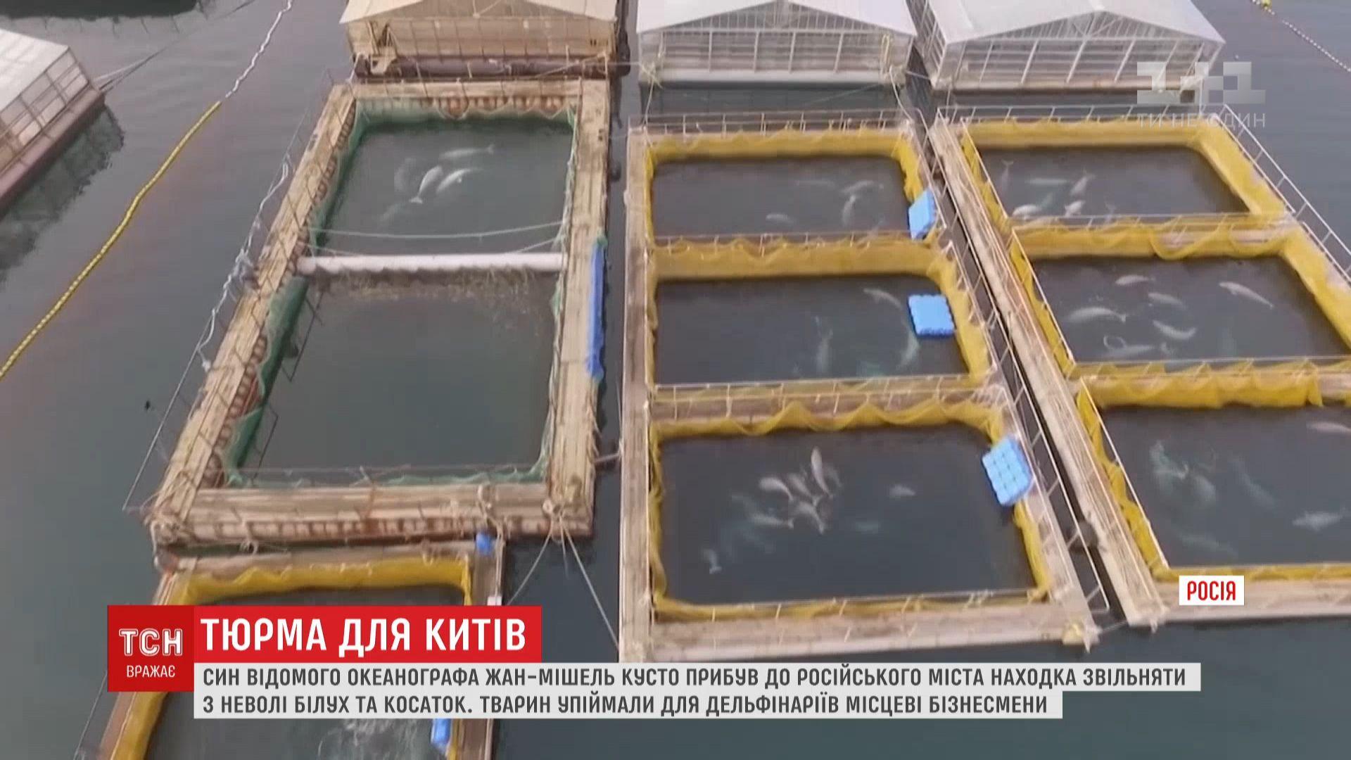 О созданной российскими бизнесменами тюрьмедля 80 белух и 10 косаток стало известно осенью / скриншот