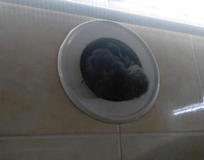 Тело вороны полностью перекрыло дымоход, продукты сгорания не имели выхода \ фейсбук Вика Балицкая