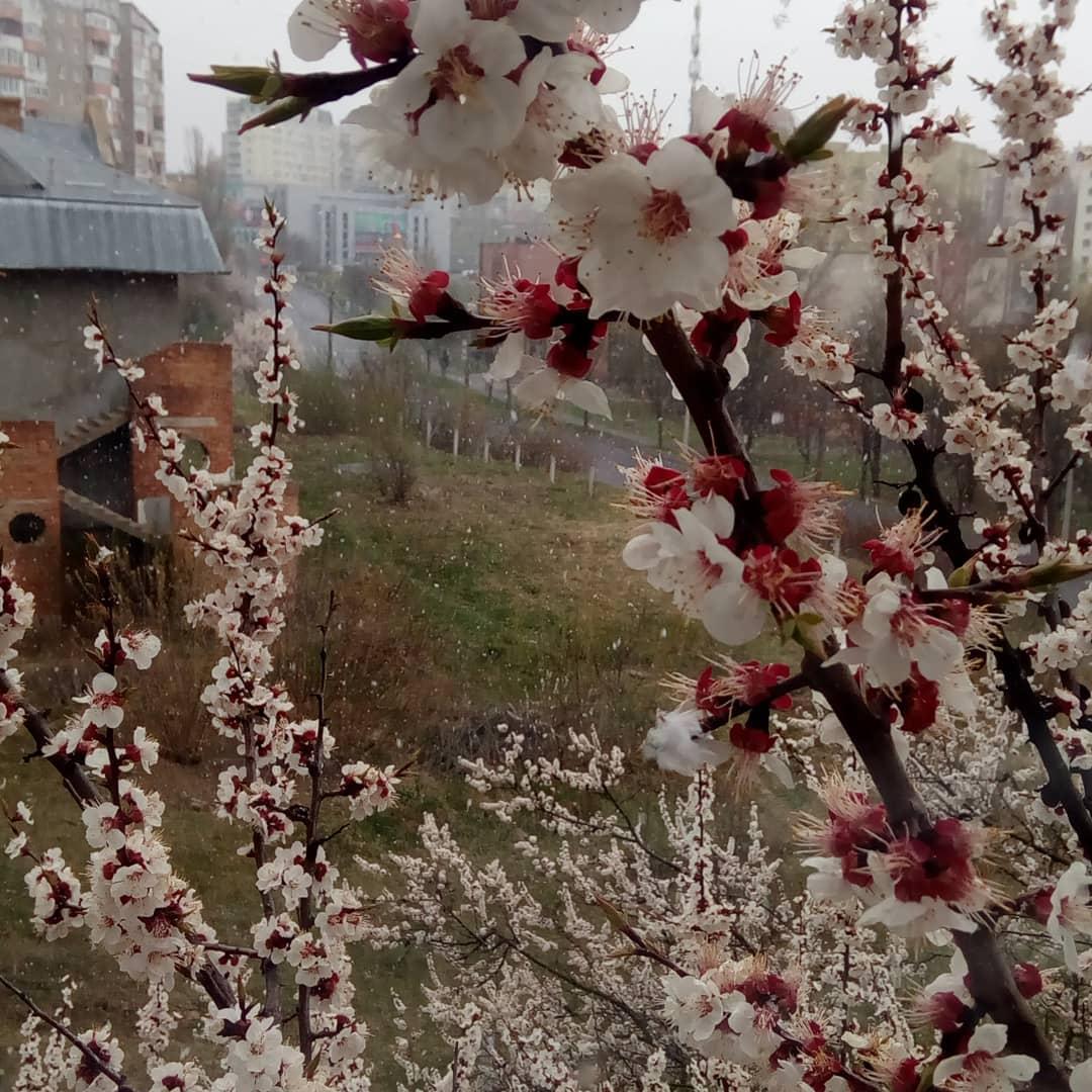 Сніг у Рівному / www.instagram.com/vitalikdavidiuk/