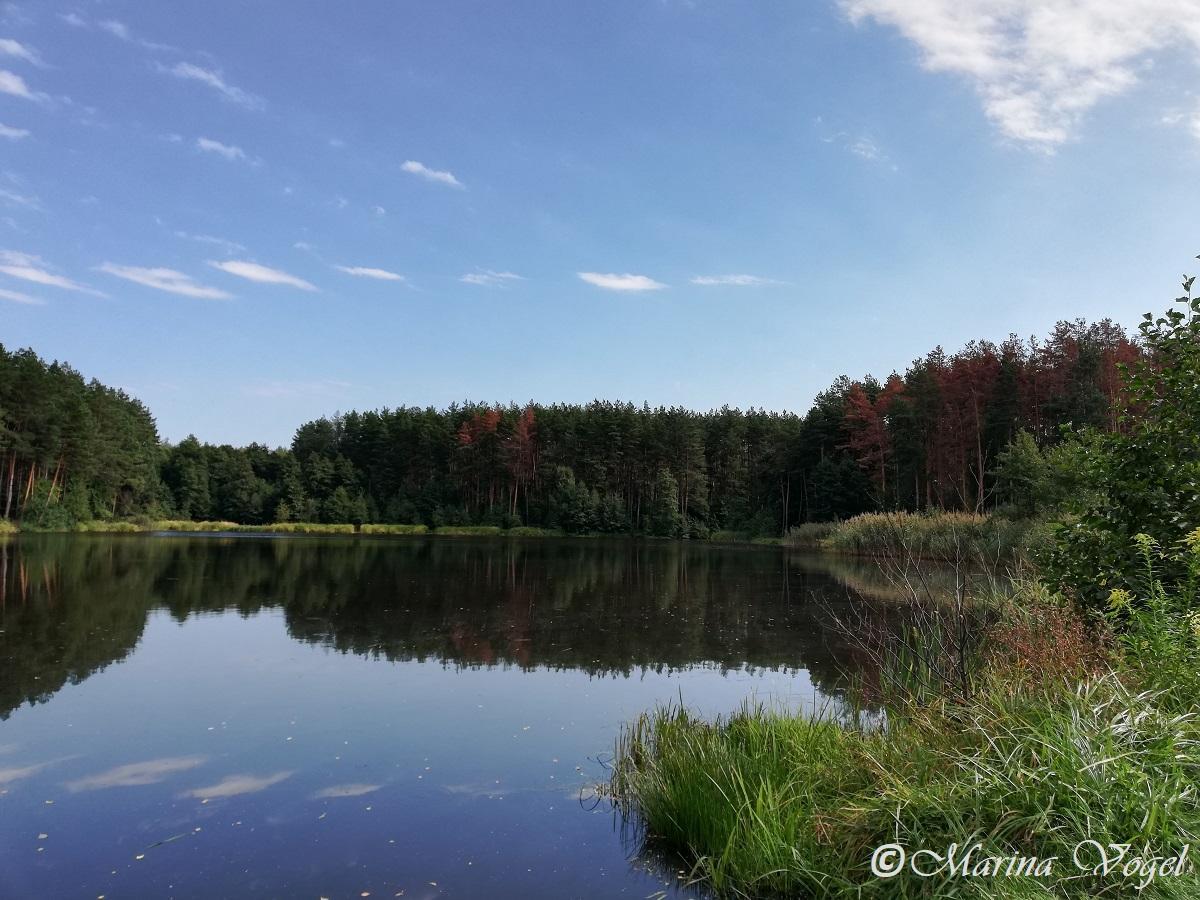 Живописное Первое озеро в Коростышеве / Фото Марина Григоренко