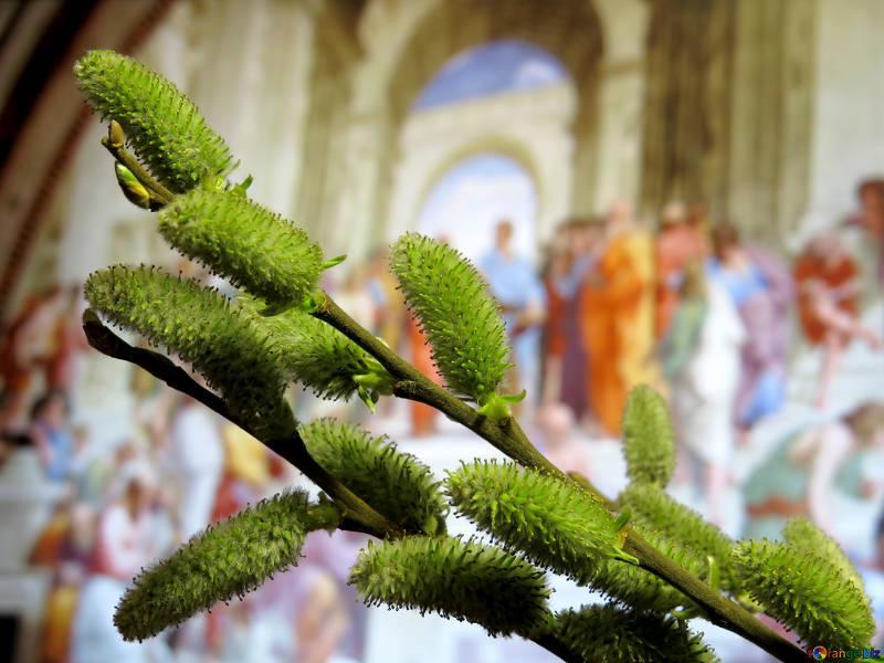 Вербна неділя вважається одним з найстаріших свят / tOrange.biz