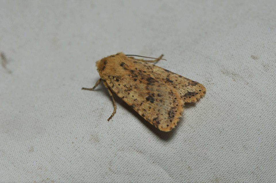 Кроме уникального шелкопряда выявили еще восемьвидов бабочек \ gx.net.ua