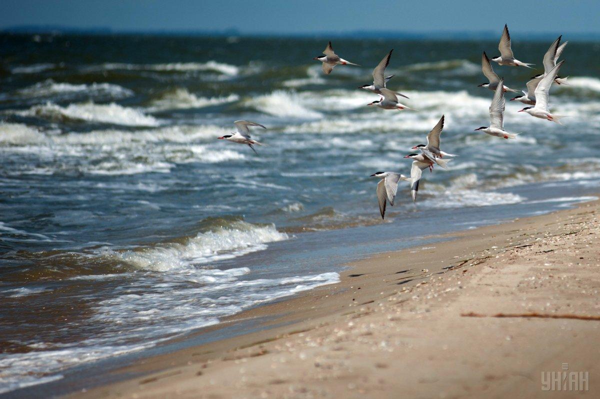 Море – туризм и торговый порт – являются основным источником дохода для небольшого города \ УНИАН