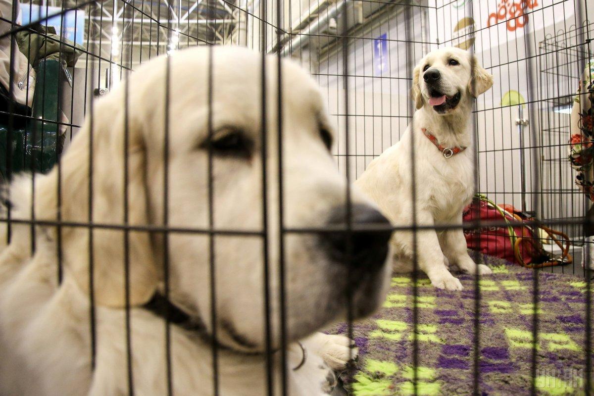 В США запретили ввозить собак из Украины/УНИАН