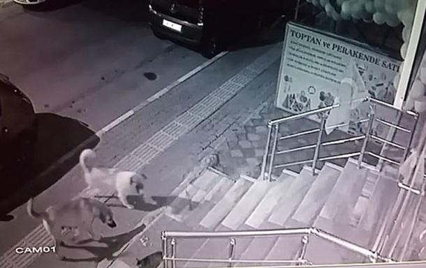 Хоробрий кіт потрапив на відео / Скріншот
