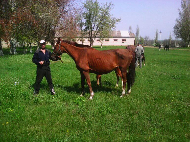 У многих лошадей есть жеребята, которые рискуют погибнуть из-за нехватки молока