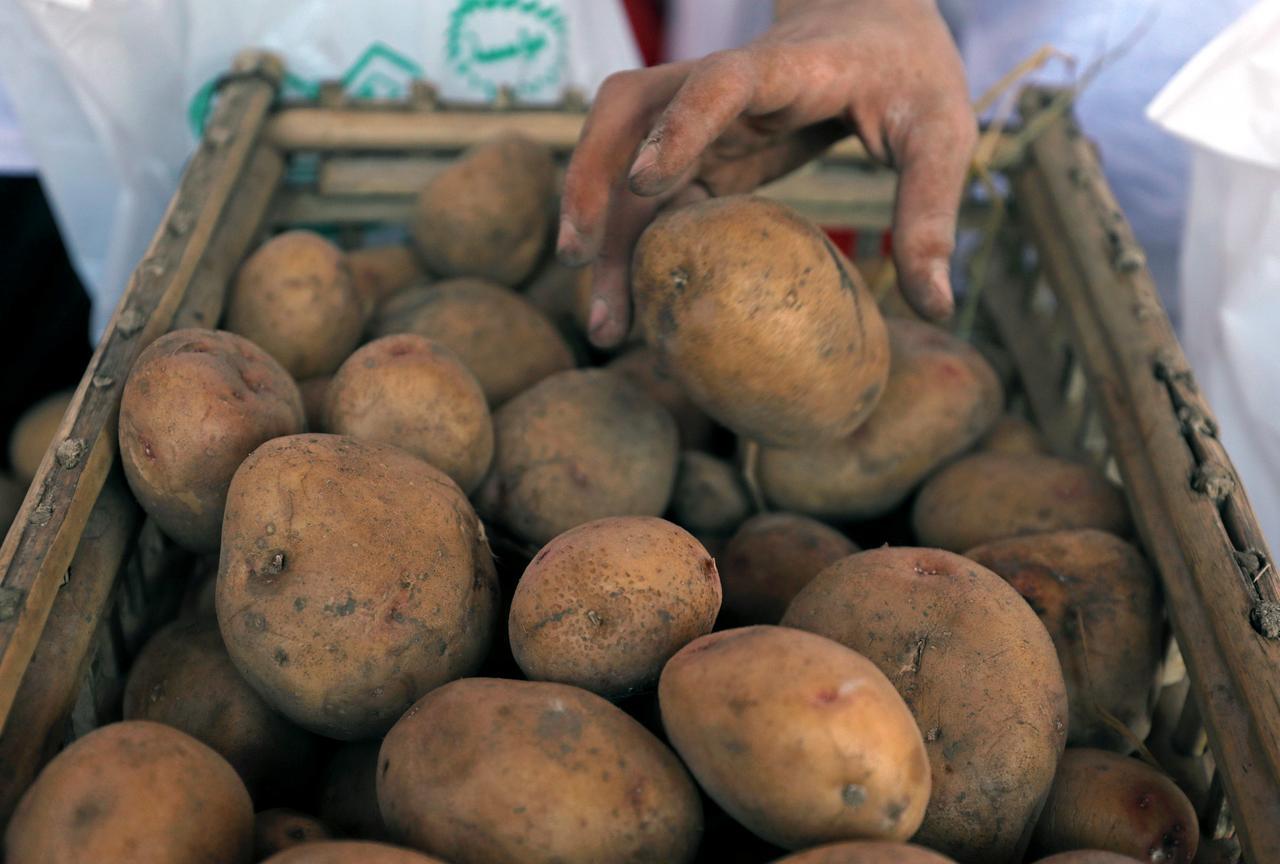 Украина продолжает увеличивать импорт картофеля из Польши и Беларуси / REUTERS
