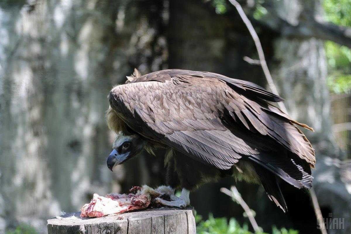 Еды животным в Киевском зоопарке хватает, потому не стоит кормить их хлебом / Фото УНИАН