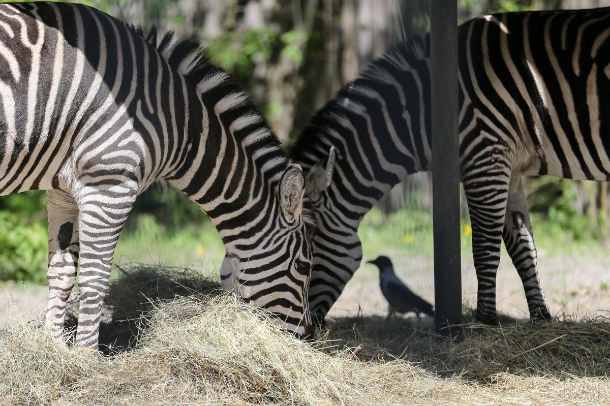 Киевский зоопарк готовится к летнему сезону / Фото УНИАН