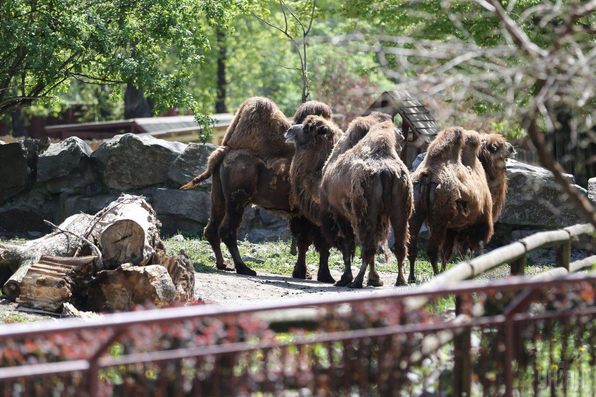 В Киевском зоопарке хотят сделать ставку на большие группы животных / Фото УНИАН
