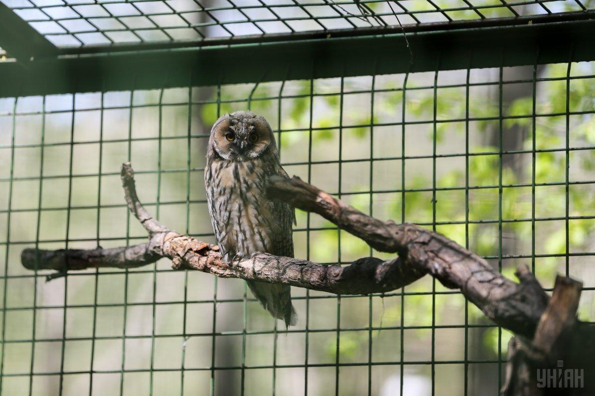 Київський зоопарк славиться своїми птахами / Фото УНІАН
