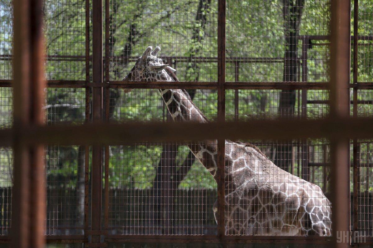 В Киевском зоопарке хотят избавиться от решеток в вольерах / Фото УНИАН