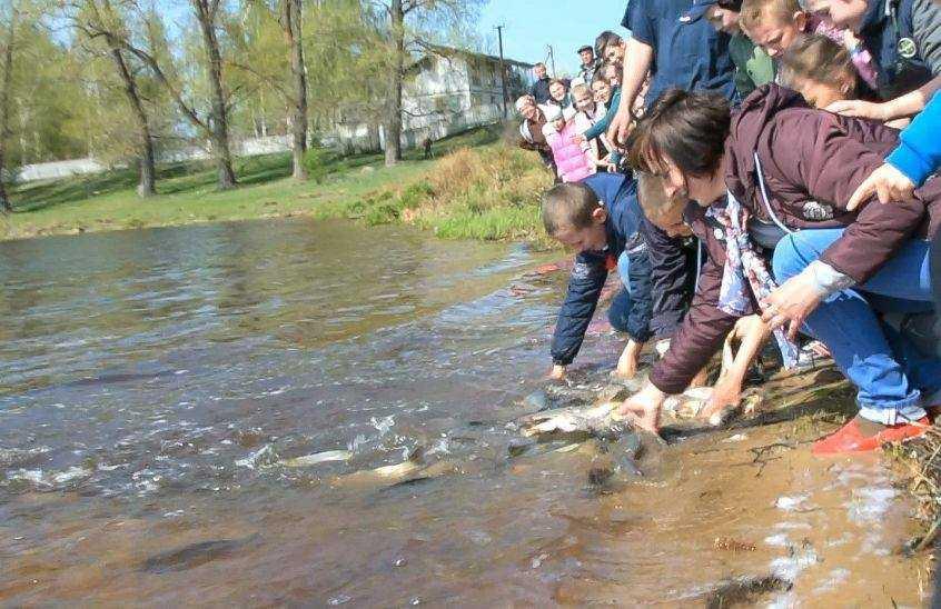 В реки Житомирщины выпустили 2 тонны рыбы / фото пресс-служба горсовета Коростеня