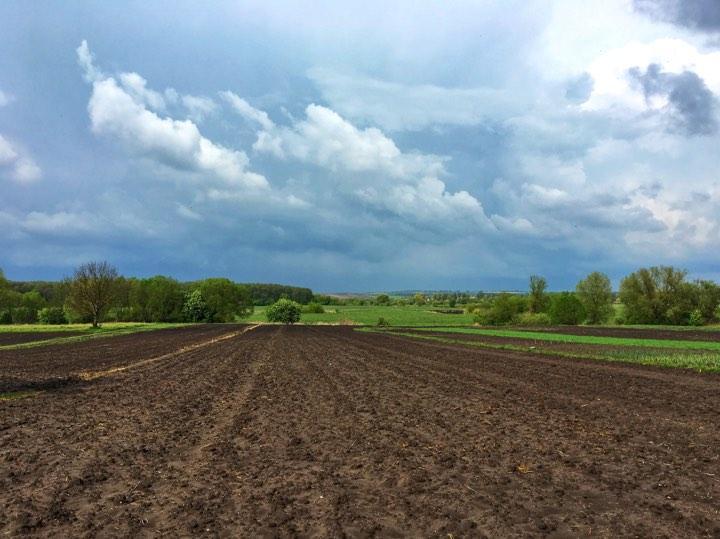 Обеспеченность семенами яровых в регионах составляет100% общей потребности / фото Лилии Кучер