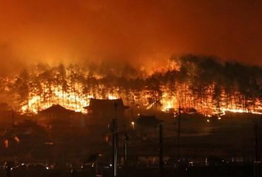 Из-за лесного пожара на Канарах эвакуировали 9 тысяч человек