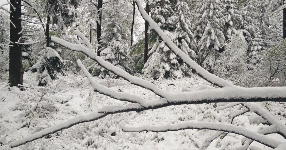 Осадки принес циклон с севера / фото twitter.com/Fliep