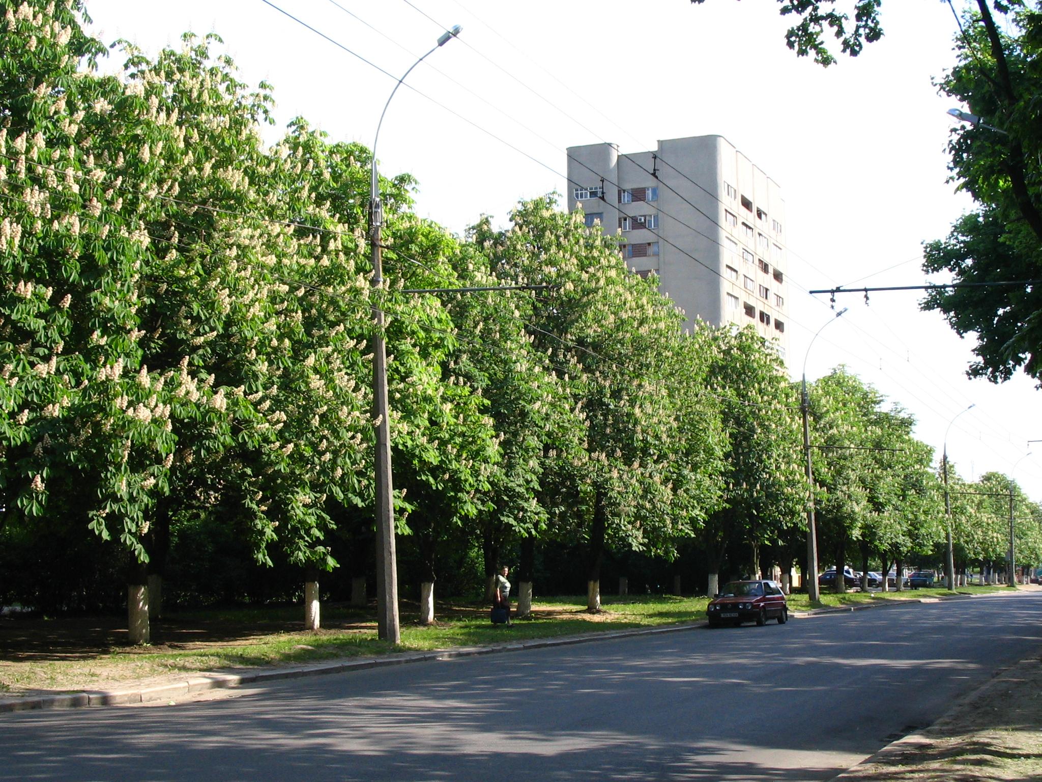 ПроспектуГригоренко хотят вернуть прежнее название / фото: Wikipedia