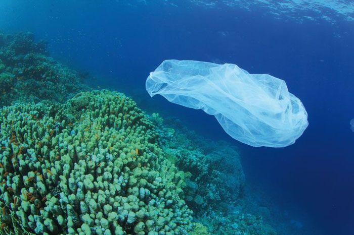 У Манільськійзатоці на Філіппінах знайшли пластиковий пакет / фото gb.pl