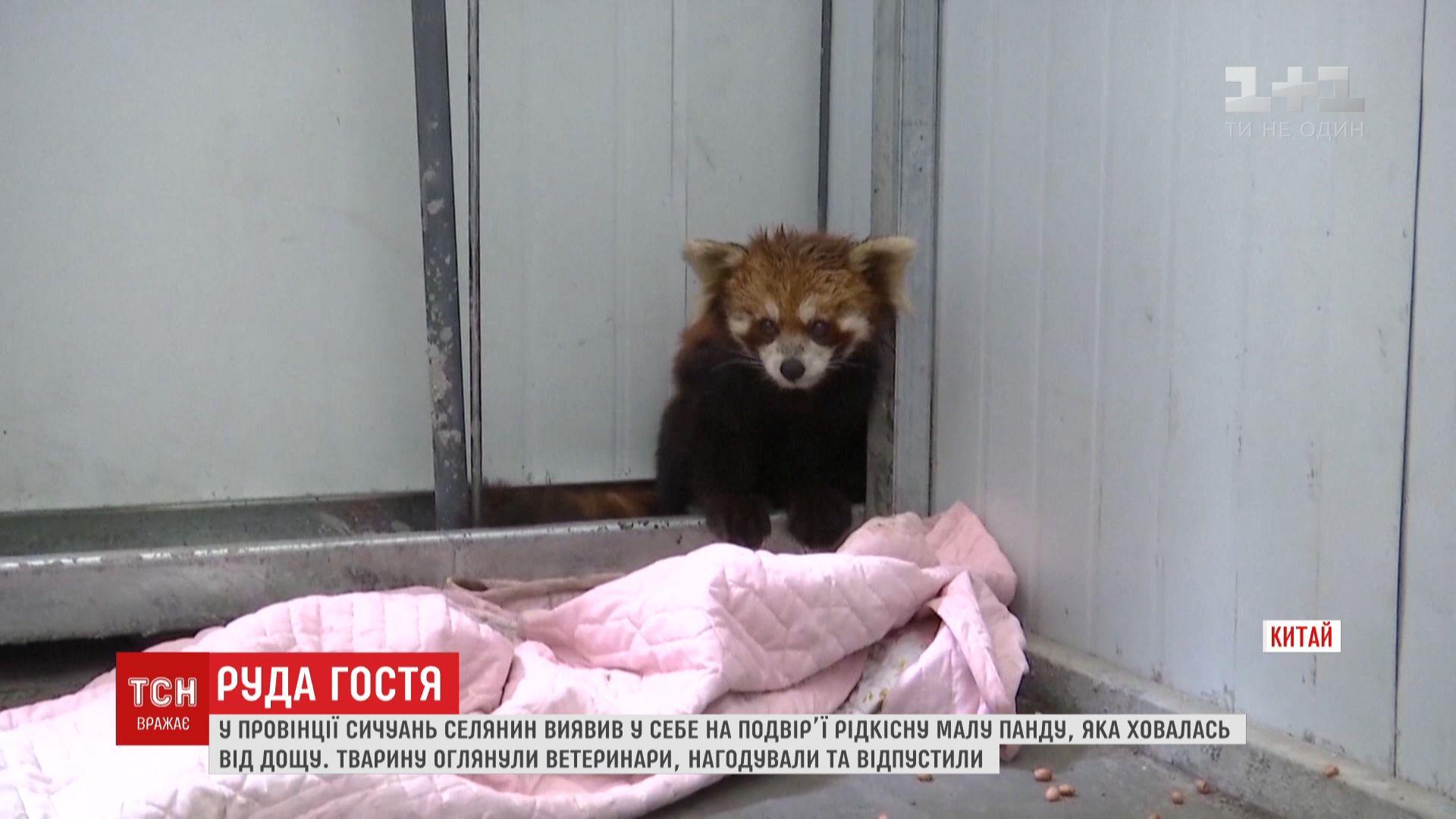 Ветеринары осмотрели животное, но никаких ранений не обнаружили / скриншот