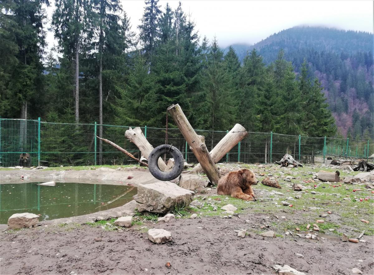 Центр реабілітації бурих ведмедів / Фото Марина Григоренко