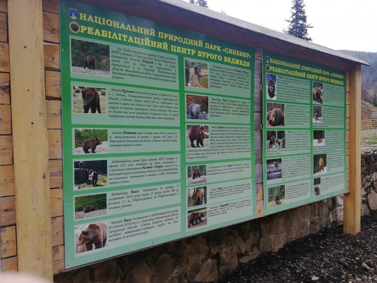 У кожного ведмедя тут своя трагічна історія / Фото Марина Григоренко