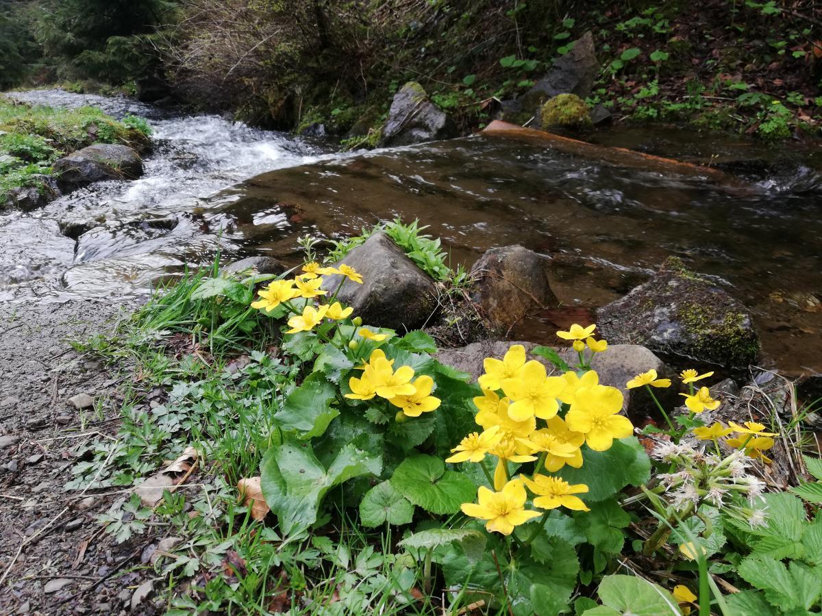 Весенний лес - идеальное место для прогулок / Фото Марина Григоренко