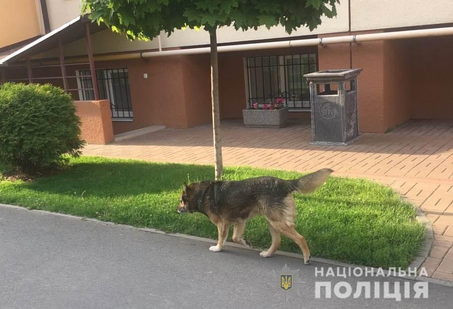 В Вишневом собака жестоко покусала 8-летнюю девочку / kv.npu.gov.ua