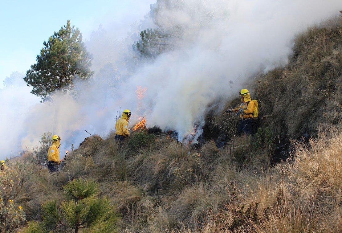 В Мексике бушует лесной пожар / twitter.com/CONAFOR