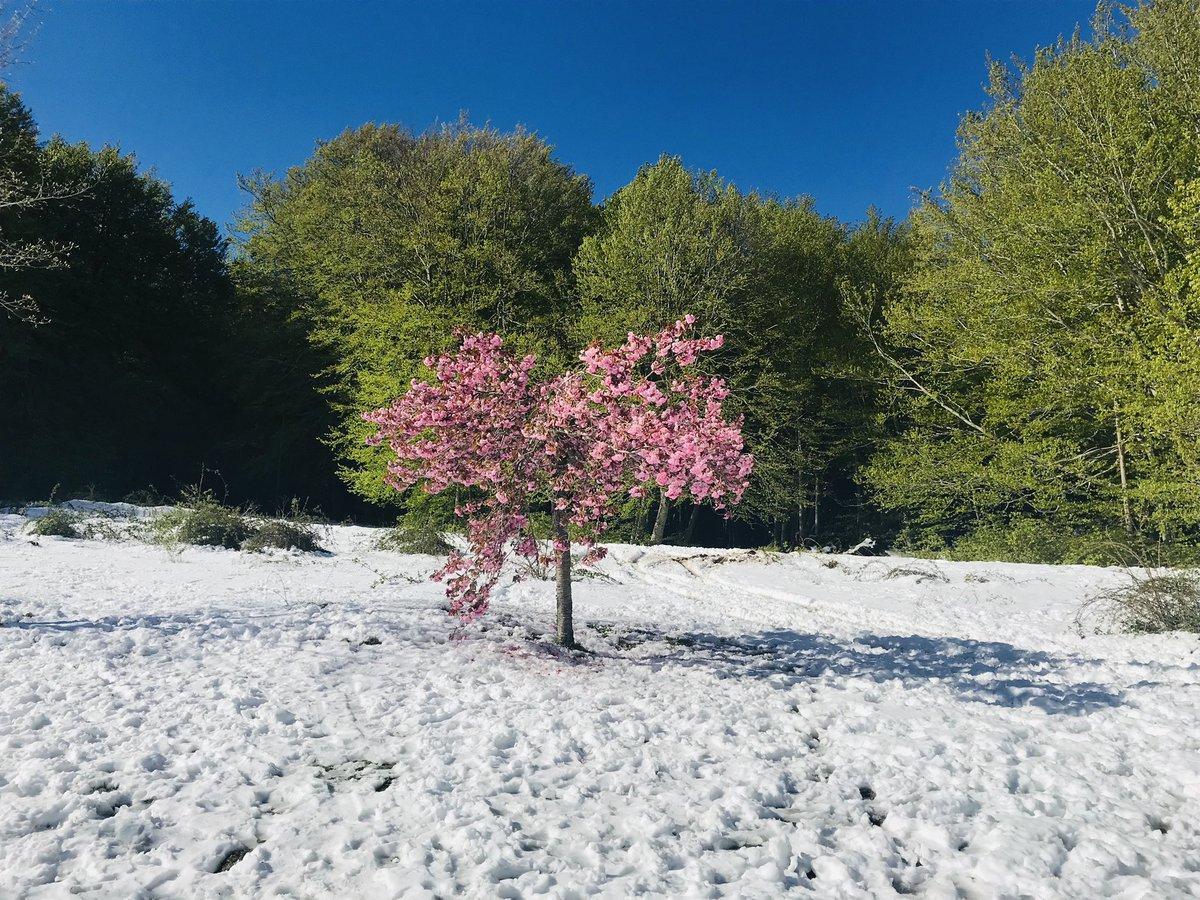 На Корсике выпал снег / twitter.com/Gilles_Simeoni