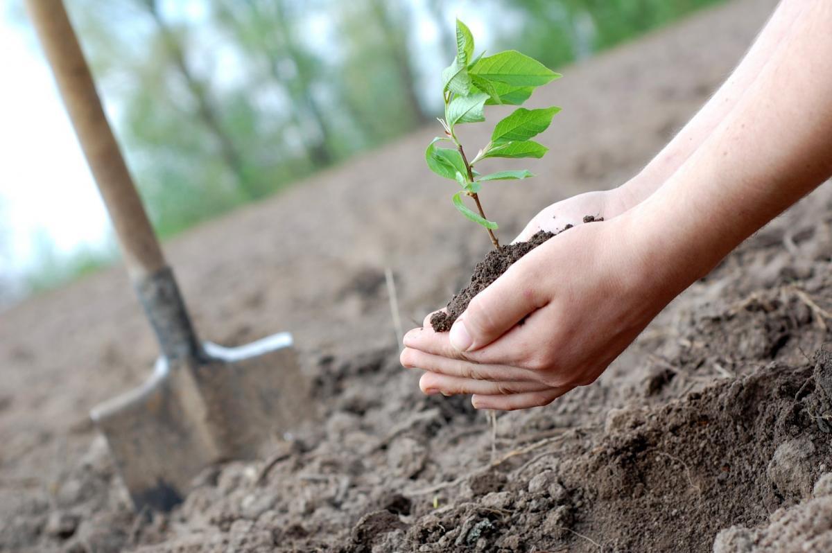 В Министерстве предлагают запретить высаживать деревья за 4-6 метров от края их земельного участка/фото: добродела.рф