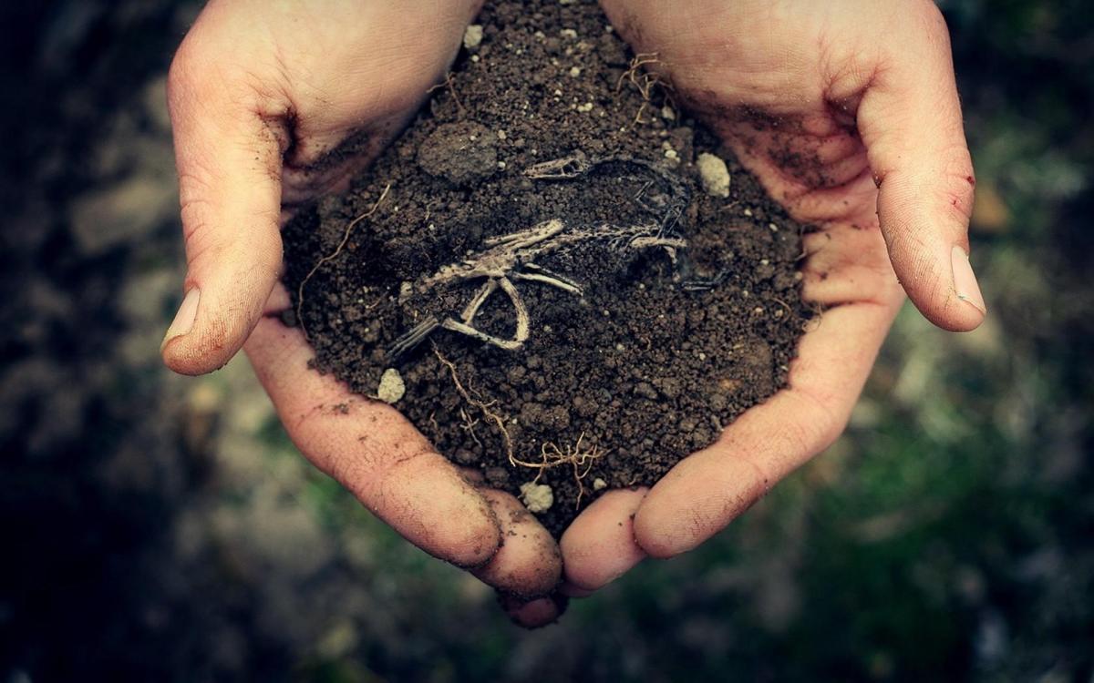 У цей день світ відзначає День захисту Землі / fonday.ru