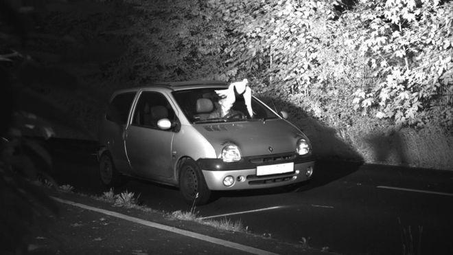Во время совершения фотоснимка пролетающий голубь оказался на уровне лица водителя / фото VIERSEN DISTRICT POLICE